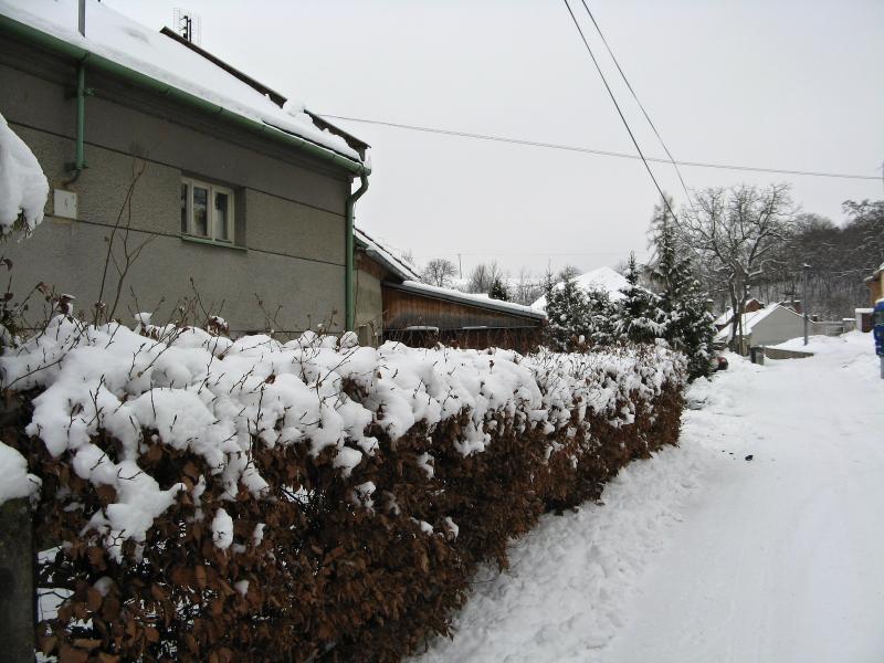 IMG_5235.JPG