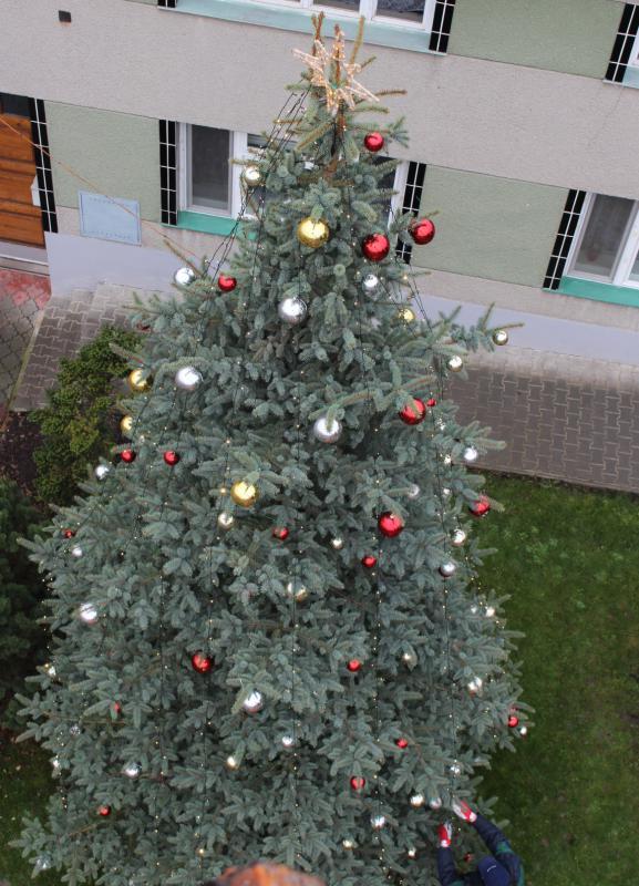 vánoční strom 2014