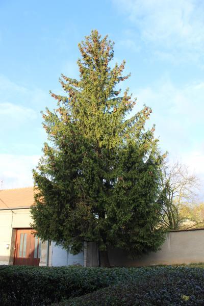 Strom stojí u domu č. p. 1