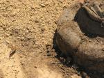 Hrob H 2 - i motýl se přiletěl podívat na odkrytý hrob